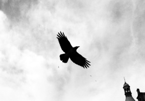 bird-379296_640